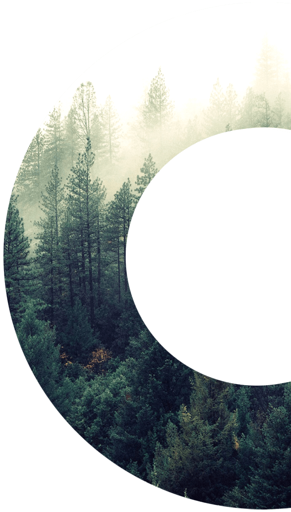 forest-circle_02 2